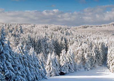 Wintry Palatinate Forest