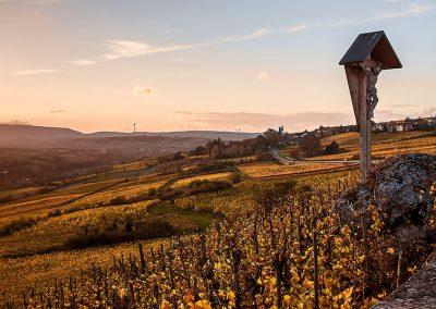 Vineyards in the Zellertal