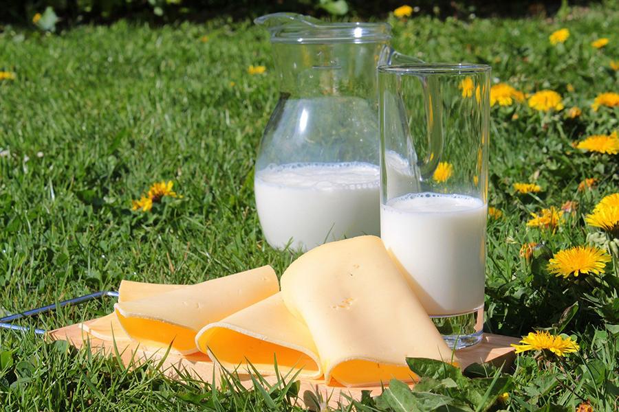 Milchprodukte, Käse