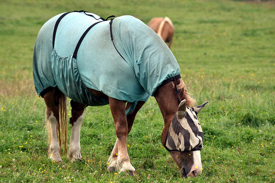 Equine physiotherapist